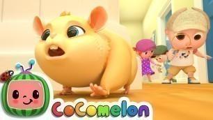 'Lost Hamster | CoComelon Nursery Rhymes & Kids Songs'