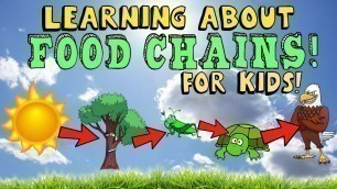 'Learning About Food Chain for Kids with Pictures and Diagram'