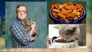 'Best Food For Cats With Kidney Disease'