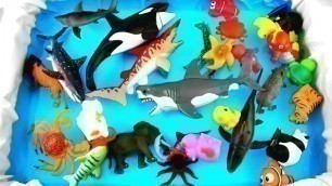 'Sea Creatures For Kids Learn Colors Shark Dolphin Beach Toy Videos For Kids'
